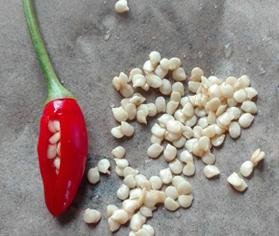 Conservación de semillas autóctonas
